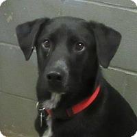Adopt A Pet :: Charlie - Glenwood, MN