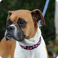 Adopt A Pet :: Talia - Alameda, CA