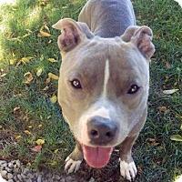 Adopt A Pet :: Juice - Lowell, MA
