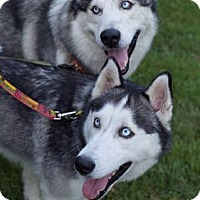 Adopt A Pet :: Zina and Kodiak (Combined fee) - Beacon, NY