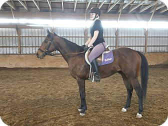 Thoroughbred for adoption in Farmington, New York - R Silver Arch