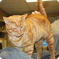 Adopt A Pet :: Samuel - Cottageville, WV