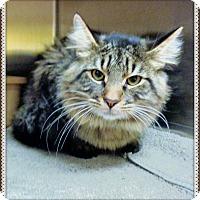 Adopt A Pet :: CHILLY - Marietta, GA