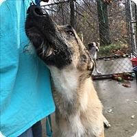 Adopt A Pet :: Fionn MacCuahill (Finn MacCool - Harmony, Glocester, RI