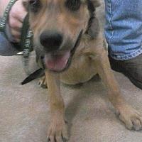 Adopt A Pet :: 9/20/16 Litter #1 - Magnolia, AR