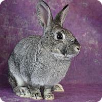 Adopt A Pet :: Sheyenne - Wilmington, NC