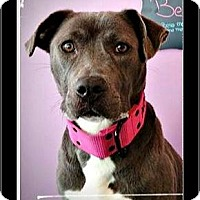 Adopt A Pet :: Bella - Waldorf, MD