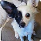 Adopt A Pet :: Sparky