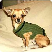 Adopt A Pet :: Tanner - Mooy, AL