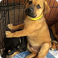 Adopt A Pet :: Aaron - Phoenix, AZ
