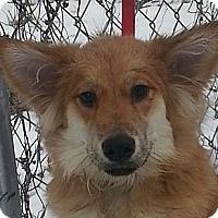 Adopt A Pet :: Clyde - Brattleboro, VT
