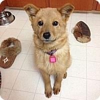 Adopt A Pet :: Enika - Saskatoon, SK