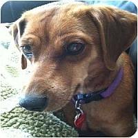 Adopt A Pet :: Marla - Phoenix, AZ