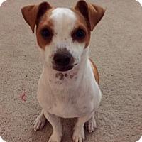 Adopt A Pet :: Chase in San Antonio - San Antonio, TX