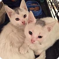Adopt A Pet :: Fefe - East Hanover, NJ