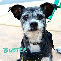 Adopt A Pet :: Buster - Sunnyvale, CA