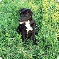 Adopt A Pet :: Ari - Waller, TX