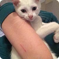Adopt A Pet :: Jaime - Kelso/Longview, WA