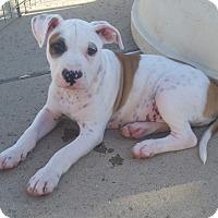 Adopt A Pet :: The States Litter - Washington - Bellflower, CA