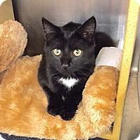 Adopt A Pet :: Francois - Colmar, PA