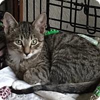 Adopt A Pet :: Haggard - McKinney, TX