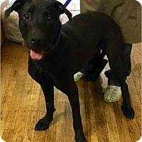 Adopt A Pet :: Blackjack - Phoenix, AZ