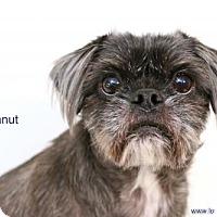 Adopt A Pet :: Peanut - Needs Foster - Bloomington, MN