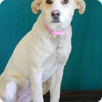 Adopt A Pet :: Fetta - Waldorf, MD