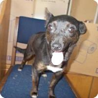 Adopt A Pet :: Sagittarius - Lewisburg, TN