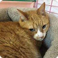 Adopt A Pet :: Lucky - Medina, OH