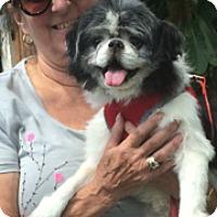 Adopt A Pet :: Gilbert - Ft. Lauderdale, FL