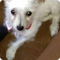 Adopt A Pet :: PUPPY PRINCE - Pleasanton, CA