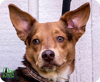 Dachshund Mix Dog for adoption in Savannah, Georgia - Loey