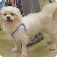 Adopt A Pet :: Coco - Memphis, TN
