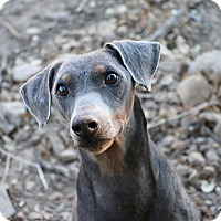 Adopt A Pet :: Randy - Fillmore, CA