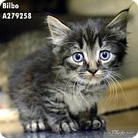 Adopt A Pet :: BILBO - Conroe, TX