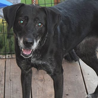 Labrador Retriever Mix Dog for adoption in Minneapolis, Minnesota - Luki