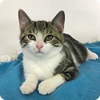 Adopt A Pet :: Nemo - Albion, NY