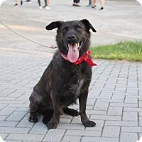 Adopt A Pet :: Datou - San Mateo, CA