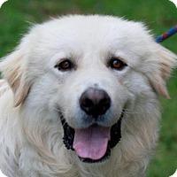 Adopt A Pet :: Prince Falkor - Brattleboro, VT