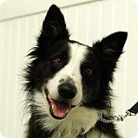 Adopt A Pet :: RIDLEY - San Pedro, CA