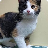 Adopt A Pet :: Rikki - Maryville, MO