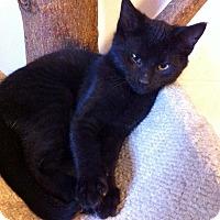 Adopt A Pet :: Al Bing - Lombard, IL