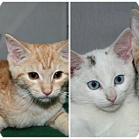 Adopt A Pet :: Coconut & Pineapple - Forked River, NJ