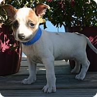 Adopt A Pet :: Vance - Waldorf, MD