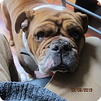Adopt A Pet :: Otis - Surrey, BC