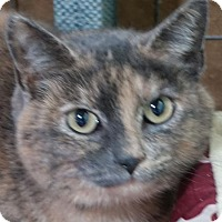 Adopt A Pet :: Senorita - Redwood City, CA