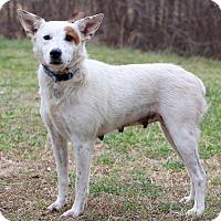 Adopt A Pet :: Zeva - Waldorf, MD