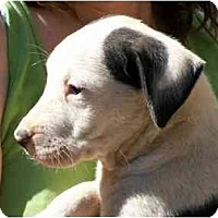 Adopt A Pet :: Jersey - Albany, NY