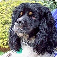 Adopt A Pet :: Amos - Glastonbury, CT